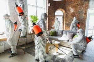 Miami Mold Removal Company