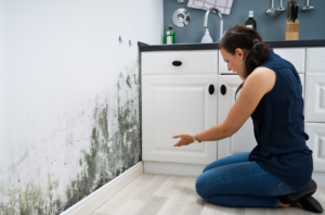 Do you need the immediate assistance of a Mold Remediation Service Company in Aventura?